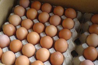 Zehirli yumurta krizi Tayvan'a sıçradı